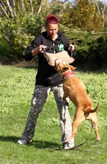 Dines trains a dog to attack Image- Facebook