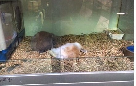How much is that dead bunny in the window? - Another upmarket product from Upmarket Pets